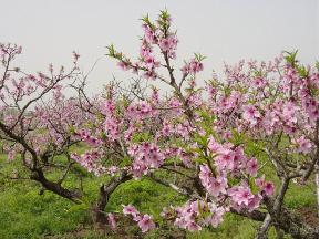 捷映 | 假期将至,开启美妙的春日旅行,记录好心情